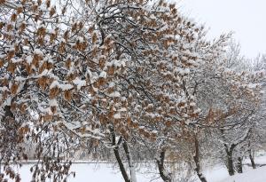Зима 2016_2