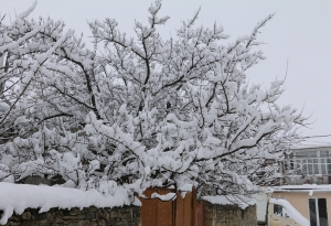 Зима 2016_3