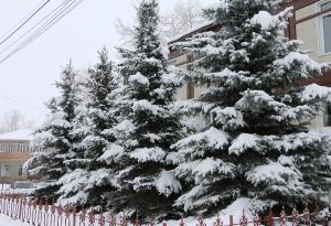 Зима 2016_5